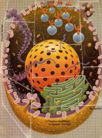 cells-katin-04